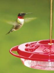 WBU Small Decorative Hummingbird Feeder